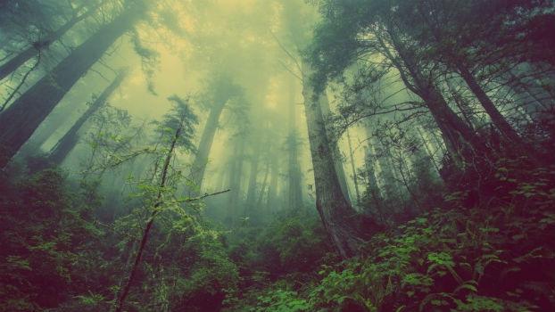 Selva en la que creció el niño salvaje